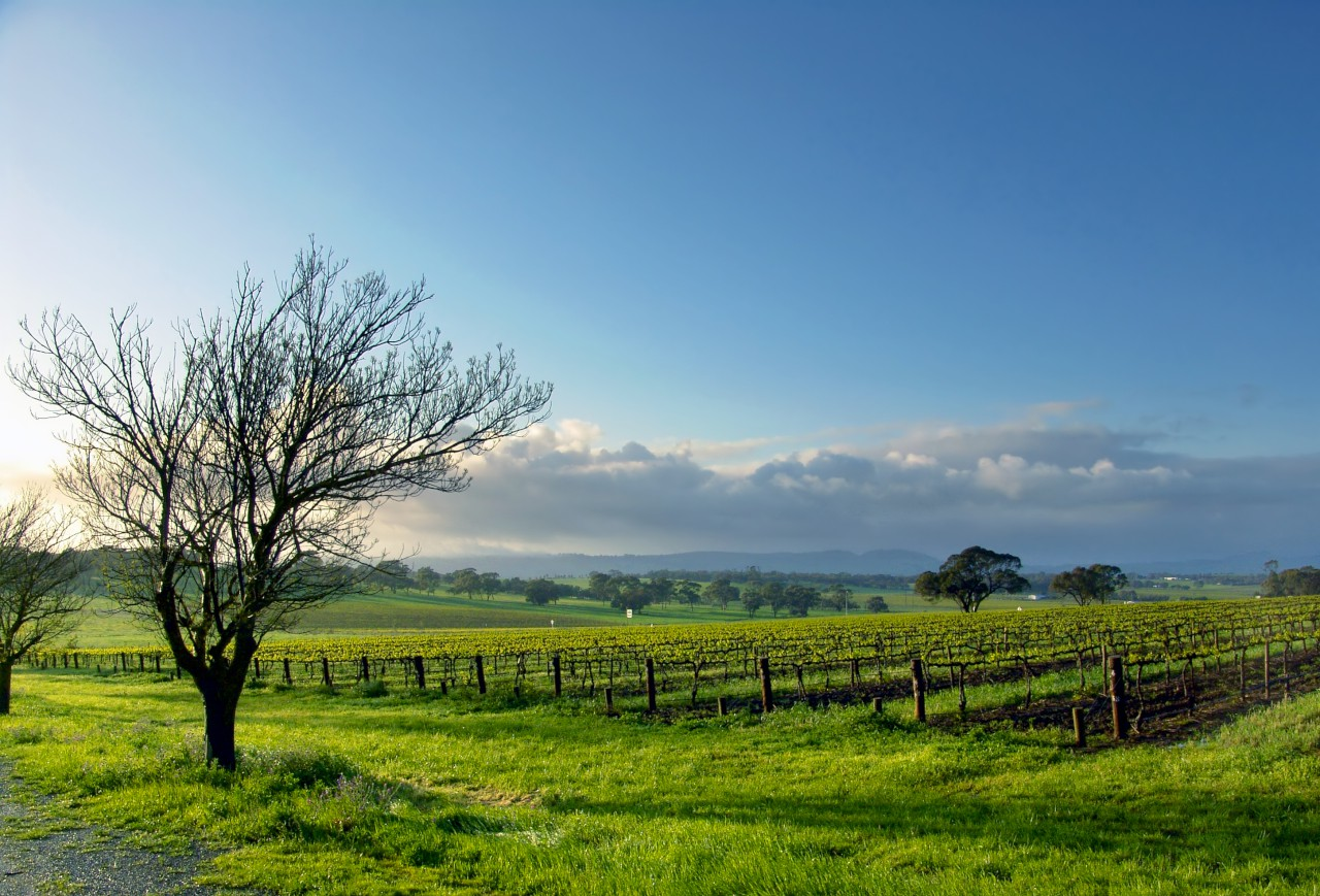 The Clare Valley Image 0